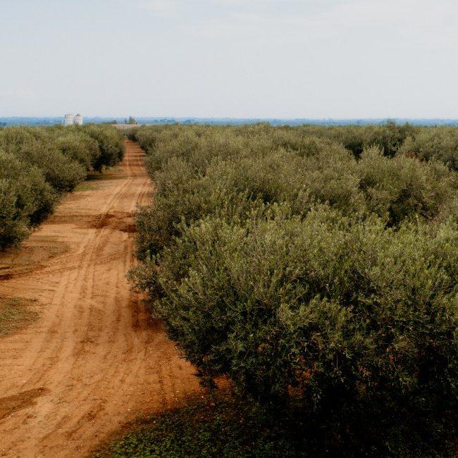 embrace olio extravergine di oliva