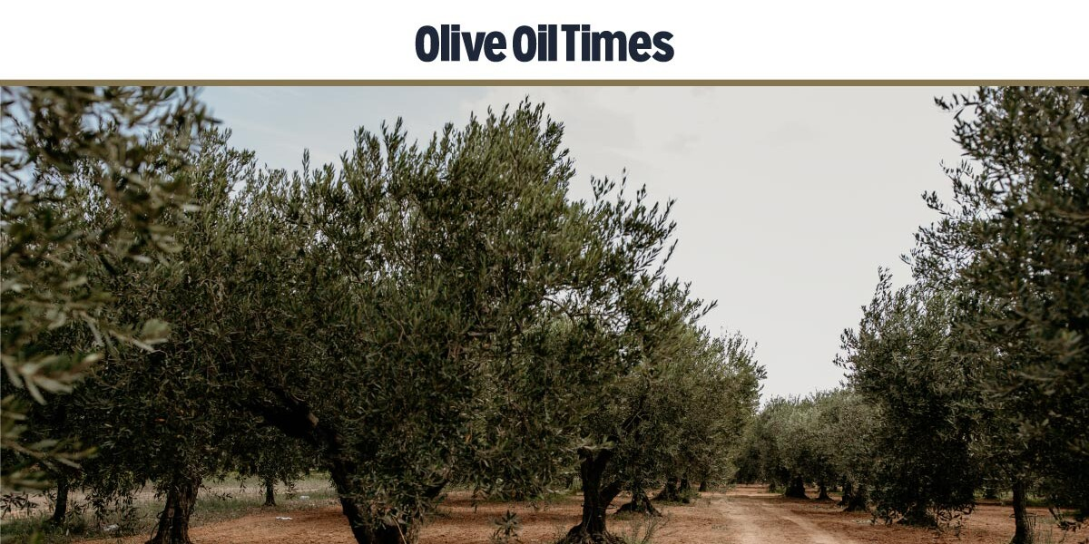 oliveoiltimes